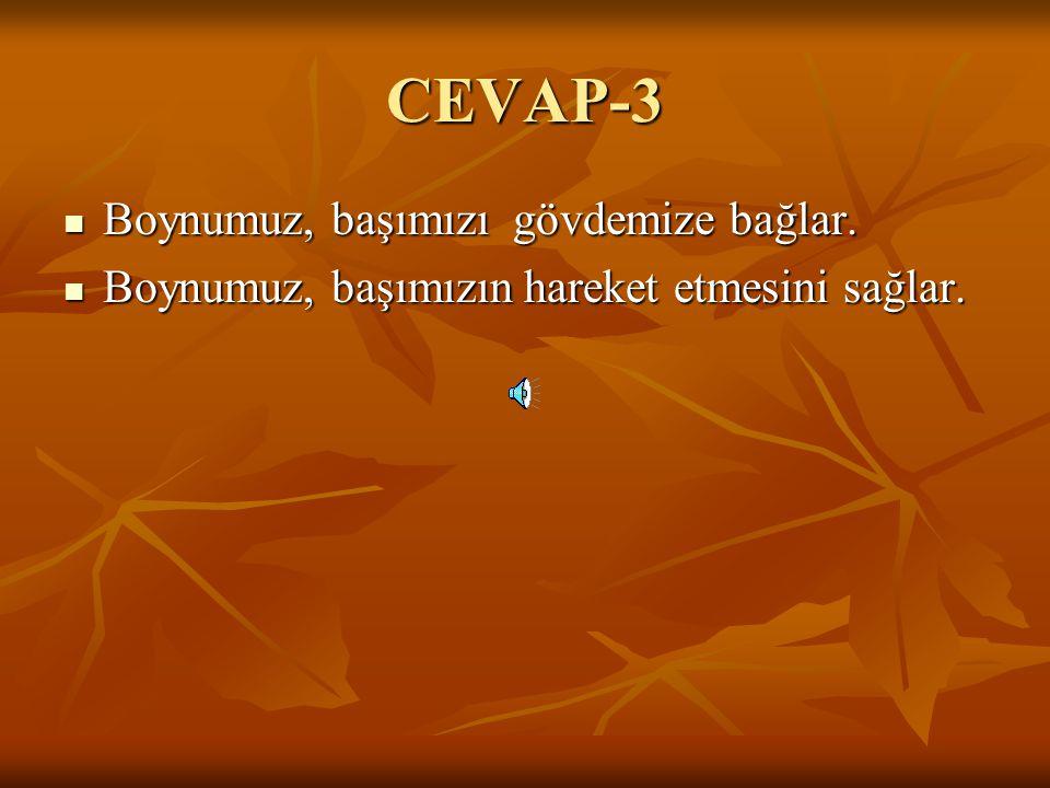 CEVAP-3 Boynumuz, başımızı gövdemize bağlar.