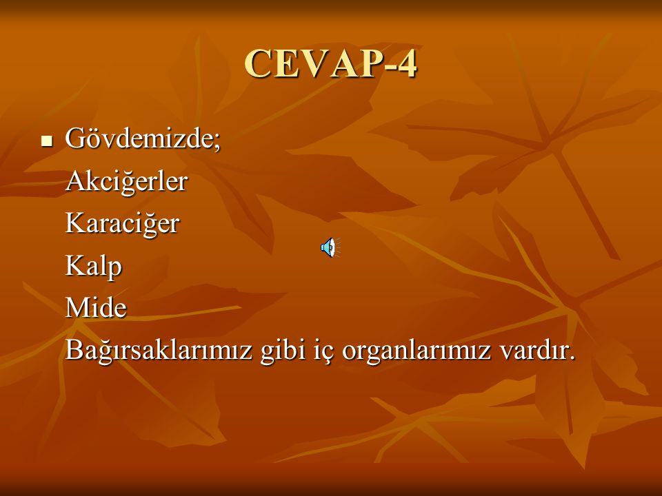 CEVAP-4 Gövdemizde; Akciğerler Karaciğer Kalp Mide