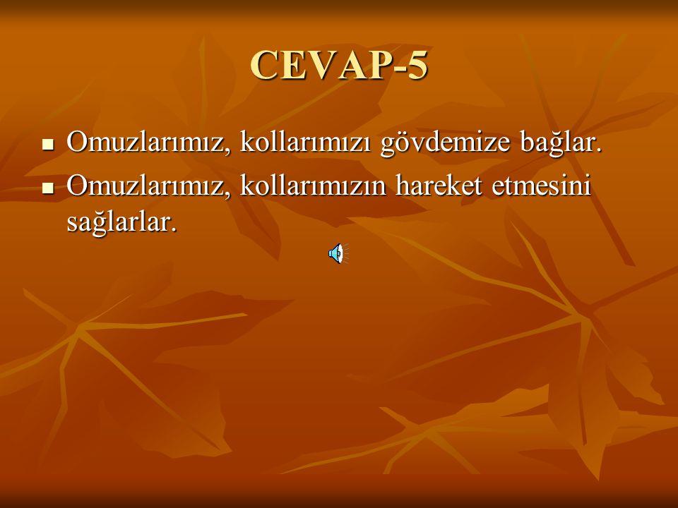 CEVAP-5 Omuzlarımız, kollarımızı gövdemize bağlar.