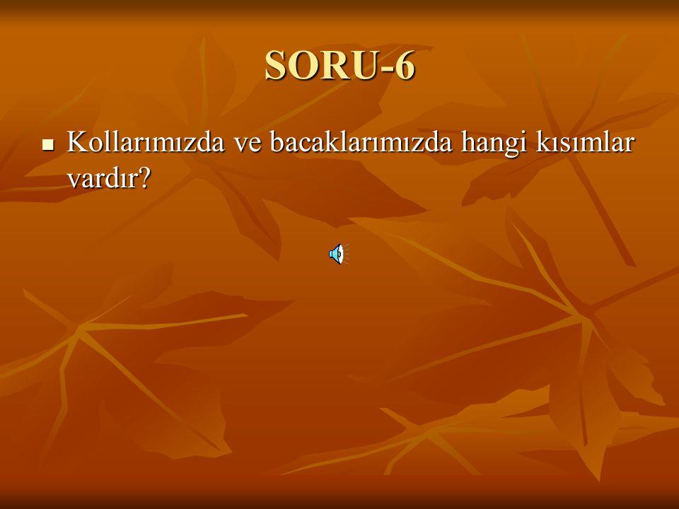 SORU-6 Kollarımızda ve bacaklarımızda hangi kısımlar vardır