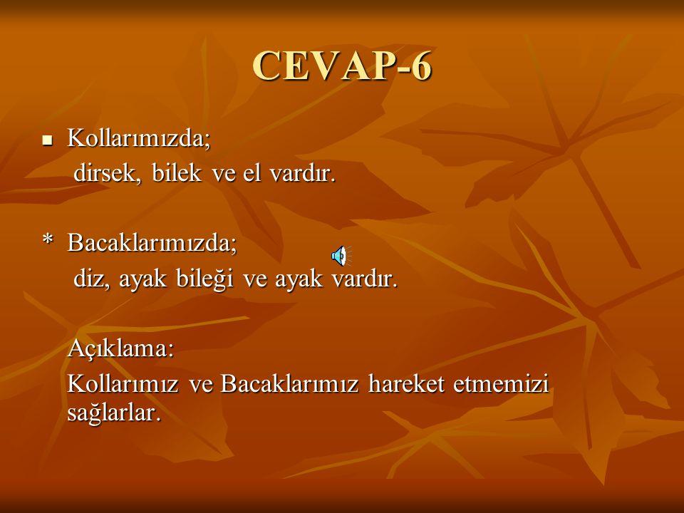 CEVAP-6 Kollarımızda; dirsek, bilek ve el vardır. * Bacaklarımızda;