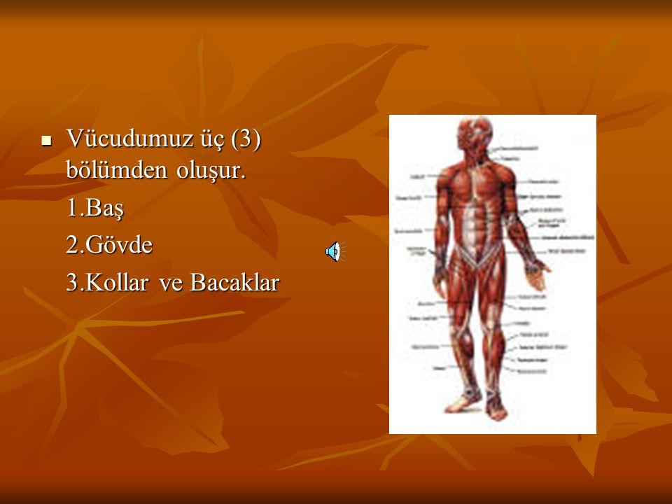 Vücudumuz üç (3) bölümden oluşur.