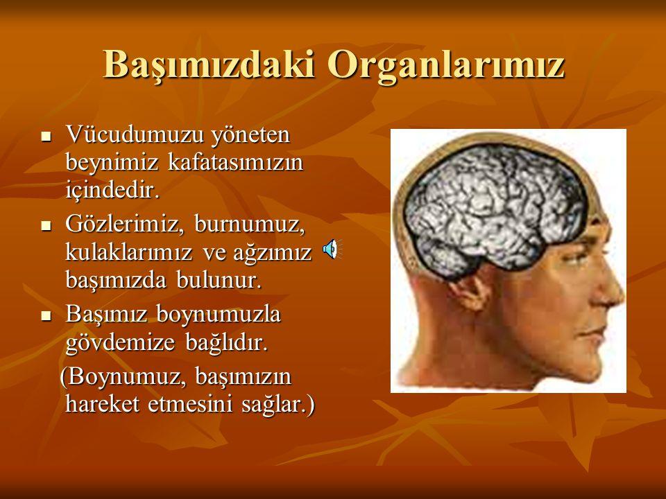 Başımızdaki Organlarımız