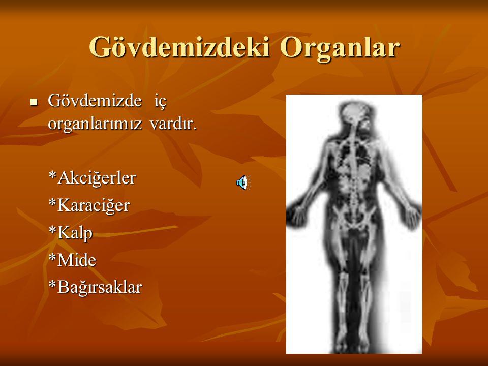Gövdemizdeki Organlar