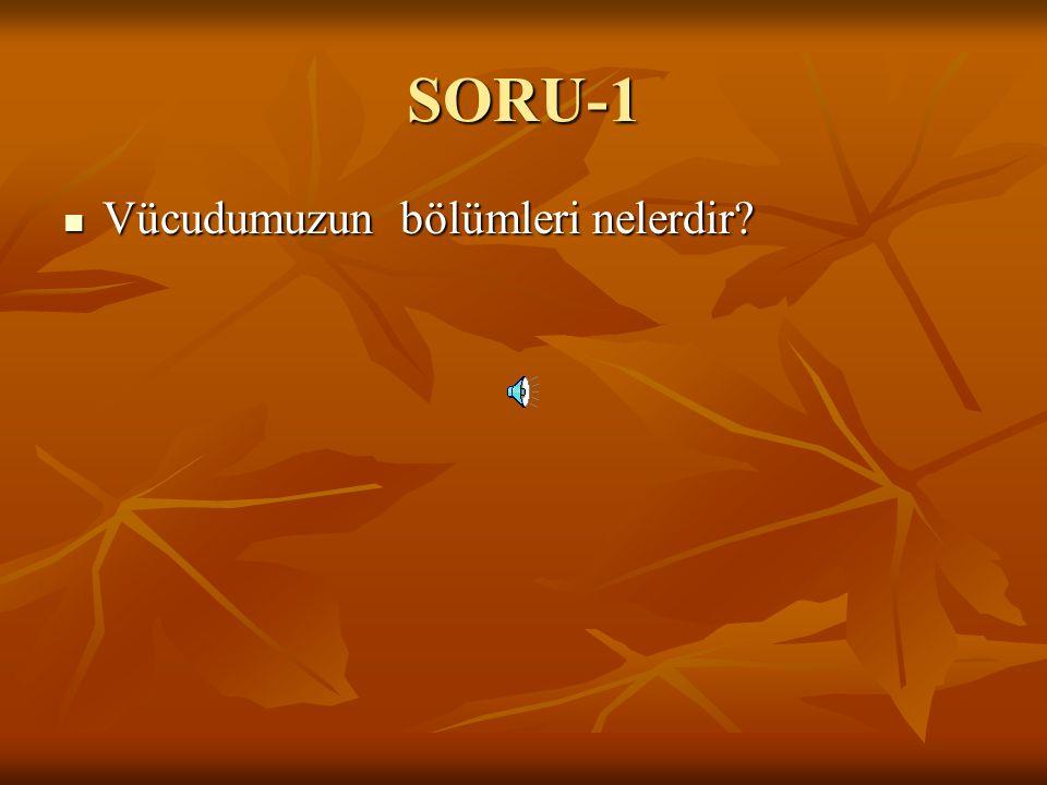SORU-1 Vücudumuzun bölümleri nelerdir
