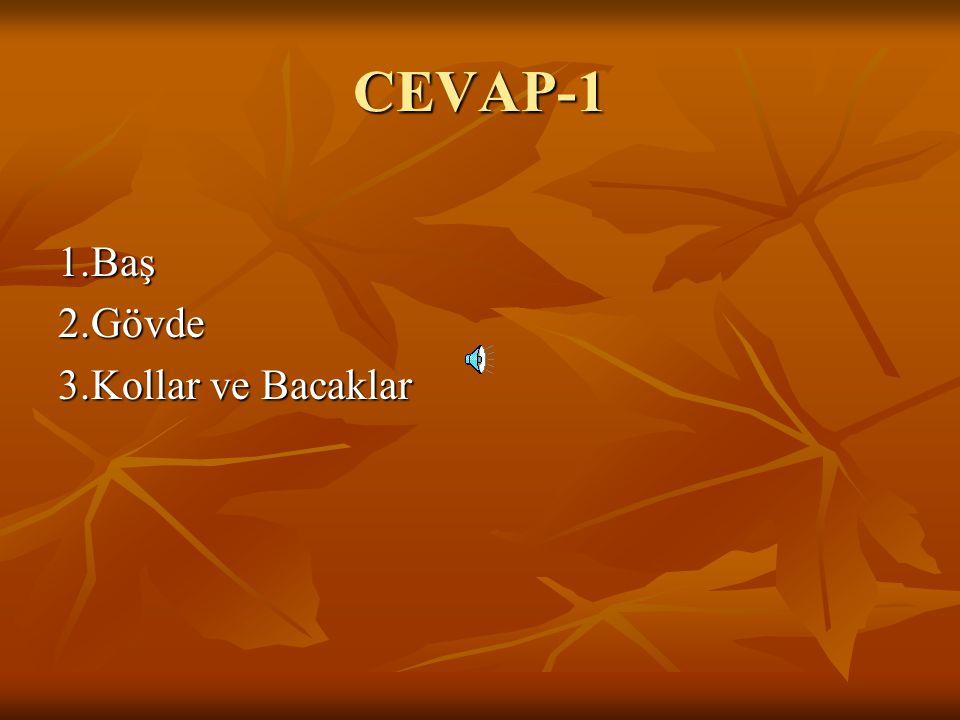 CEVAP-1 1.Baş 2.Gövde 3.Kollar ve Bacaklar