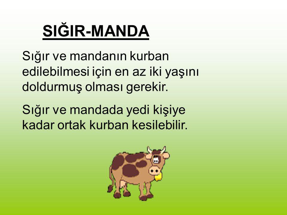 SIĞIR-MANDA Sığır ve mandanın kurban edilebilmesi için en az iki yaşını doldurmuş olması gerekir.