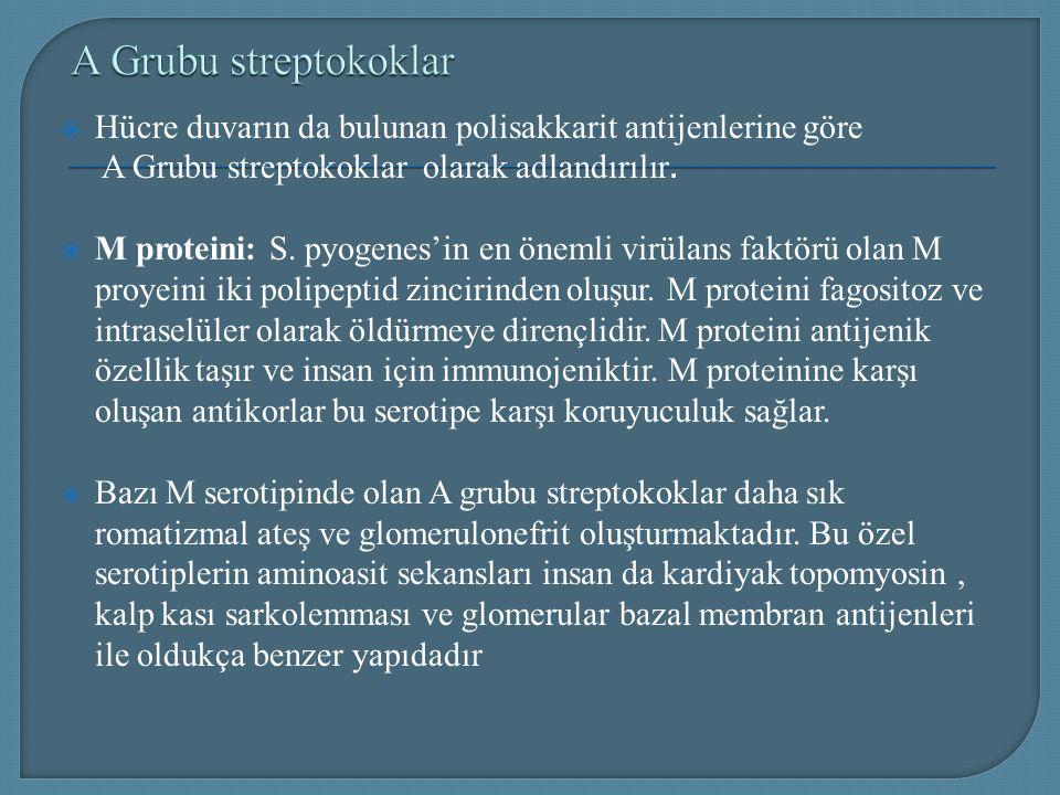 A Grubu streptokoklar Hücre duvarın da bulunan polisakkarit antijenlerine göre. A Grubu streptokoklar olarak adlandırılır.
