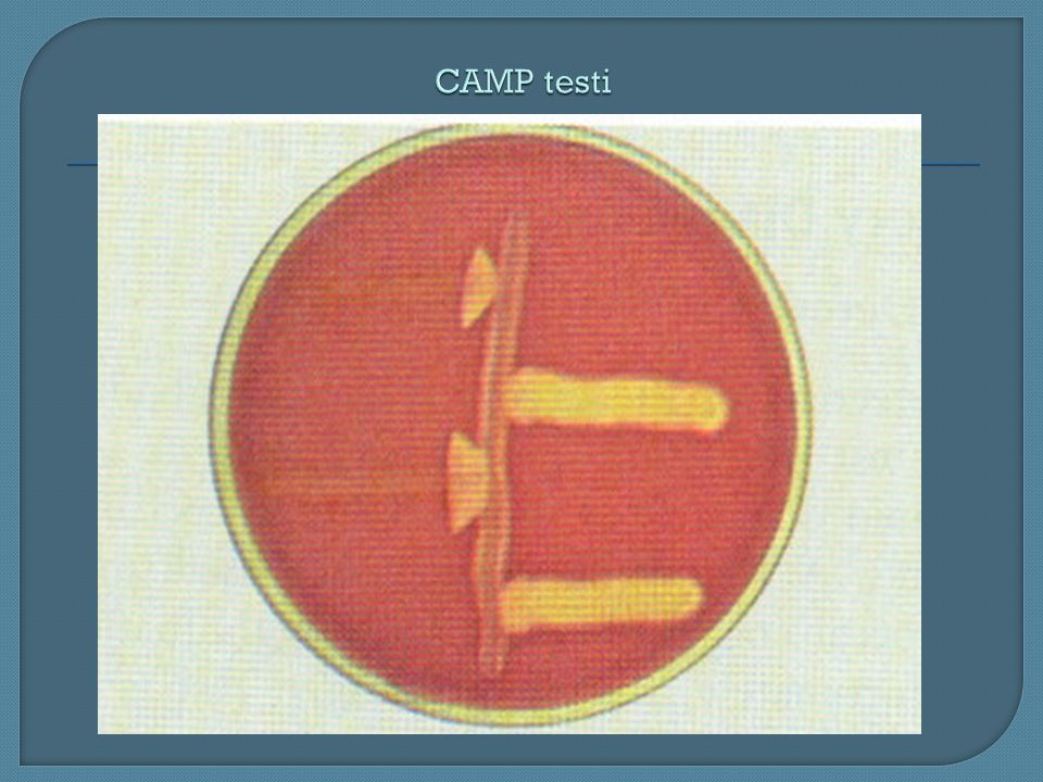 CAMP testi