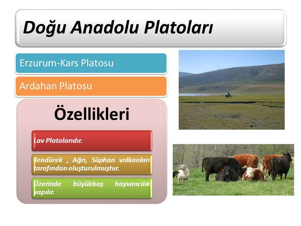Doğu Anadolu Platoları