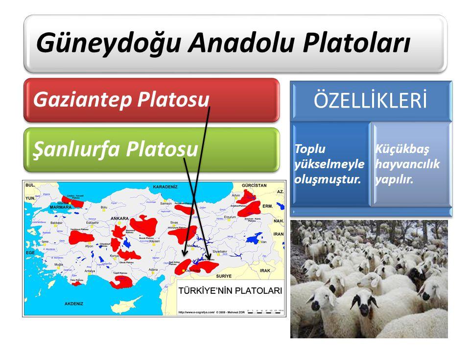 Güneydoğu Anadolu Platoları