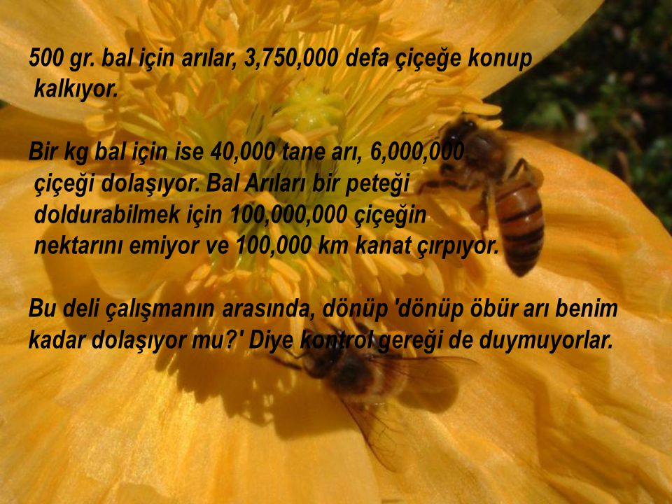 500 gr. bal için arılar, 3,750,000 defa çiçeğe konup
