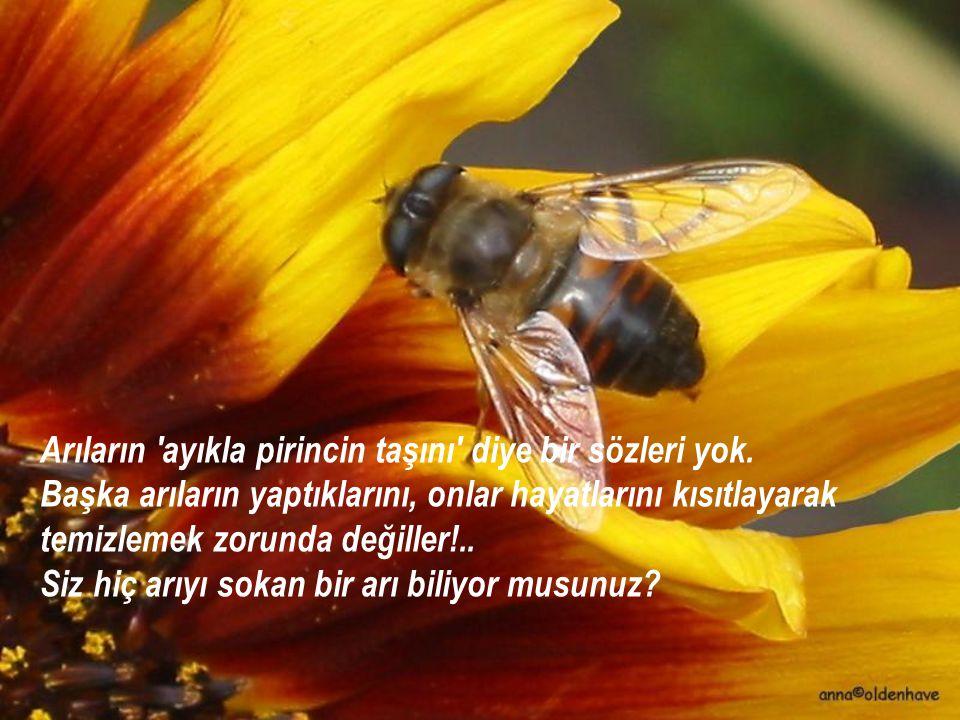 Arıların ayıkla pirincin taşını diye bir sözleri yok.