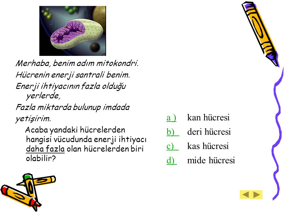 a ) kan hücresi b) deri hücresi c) kas hücresi d) mide hücresi