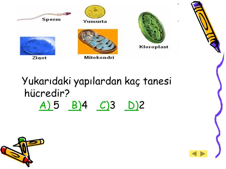 Yukarıdaki yapılardan kaç tanesi hücredir A) 5 B)4 C)3 D)2