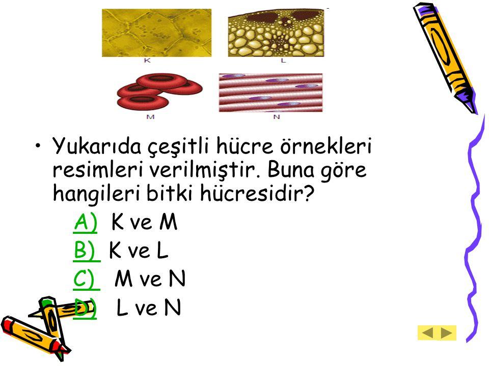 Yukarıda çeşitli hücre örnekleri resimleri verilmiştir