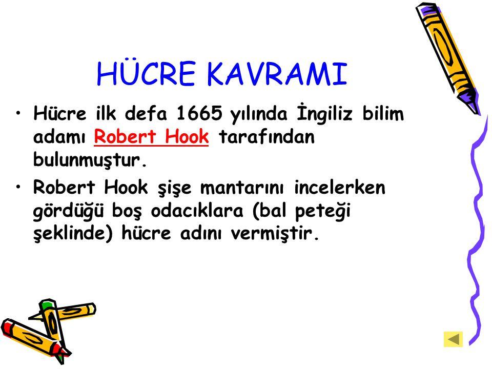 HÜCRE KAVRAMI Hücre ilk defa 1665 yılında İngiliz bilim adamı Robert Hook tarafından bulunmuştur.