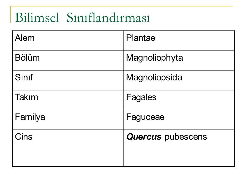 Bilimsel Sınıflandırması