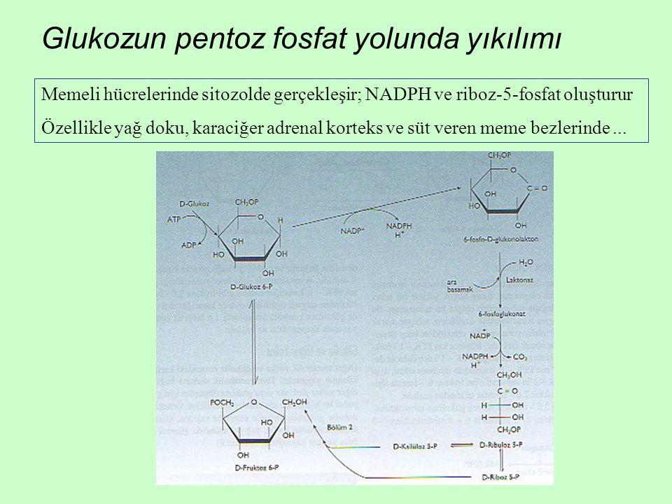 Glukozun pentoz fosfat yolunda yıkılımı