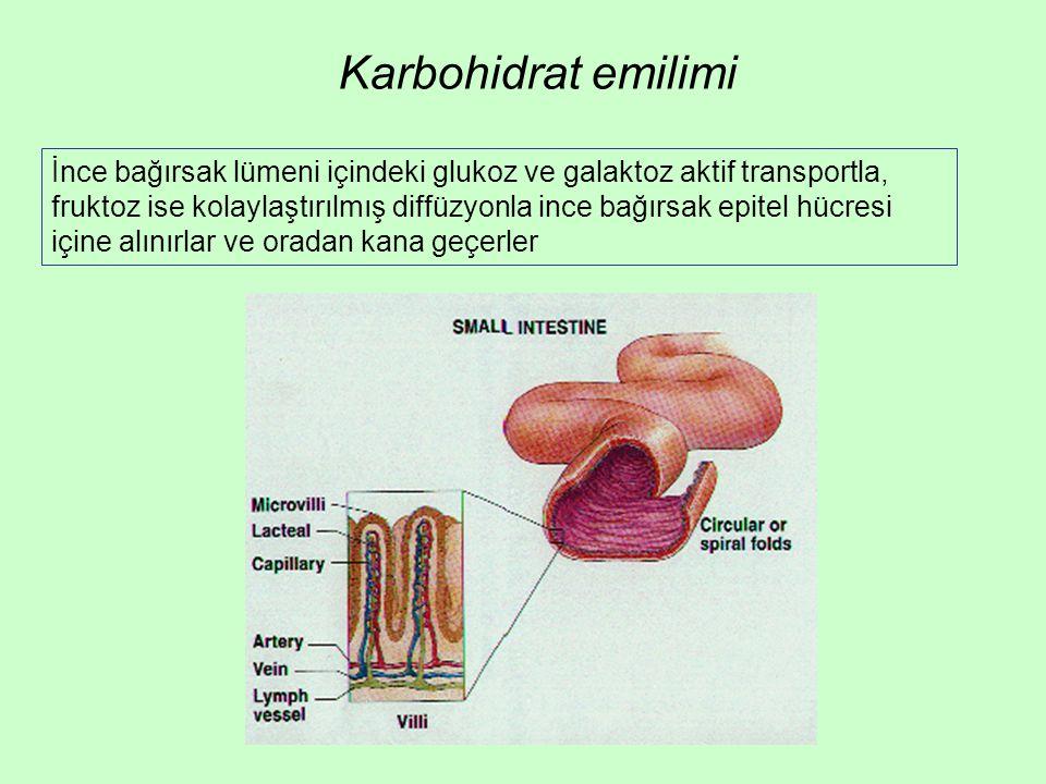 Karbohidrat emilimi