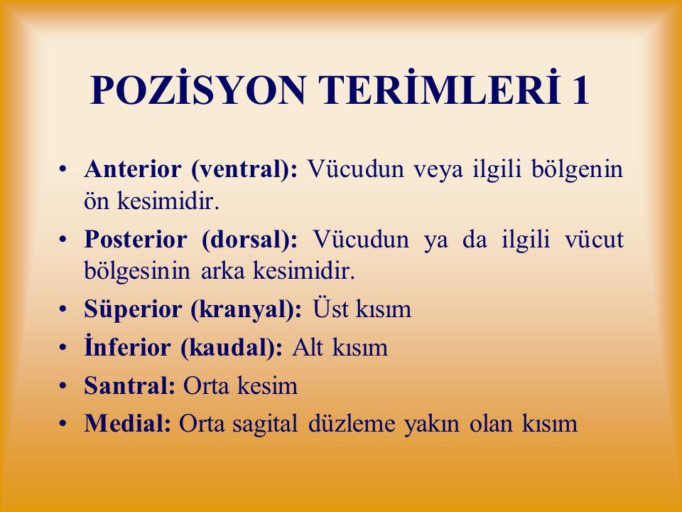 POZİSYON TERİMLERİ 1 Anterior (ventral): Vücudun veya ilgili bölgenin ön kesimidir.