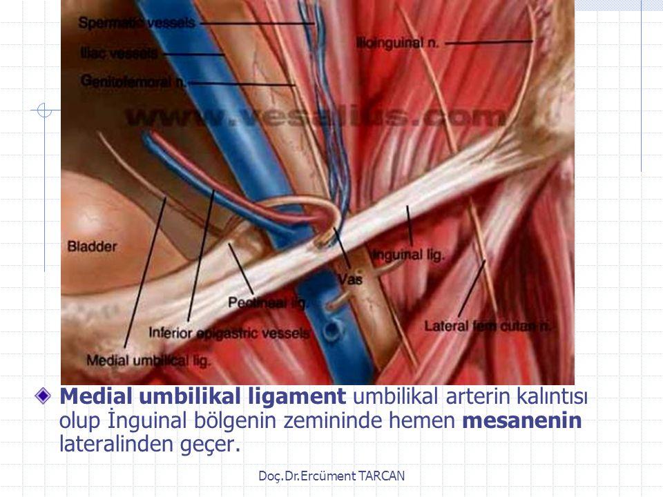 Medial umbilikal ligament umbilikal arterin kalıntısı olup İnguinal bölgenin zemininde hemen mesanenin lateralinden geçer.