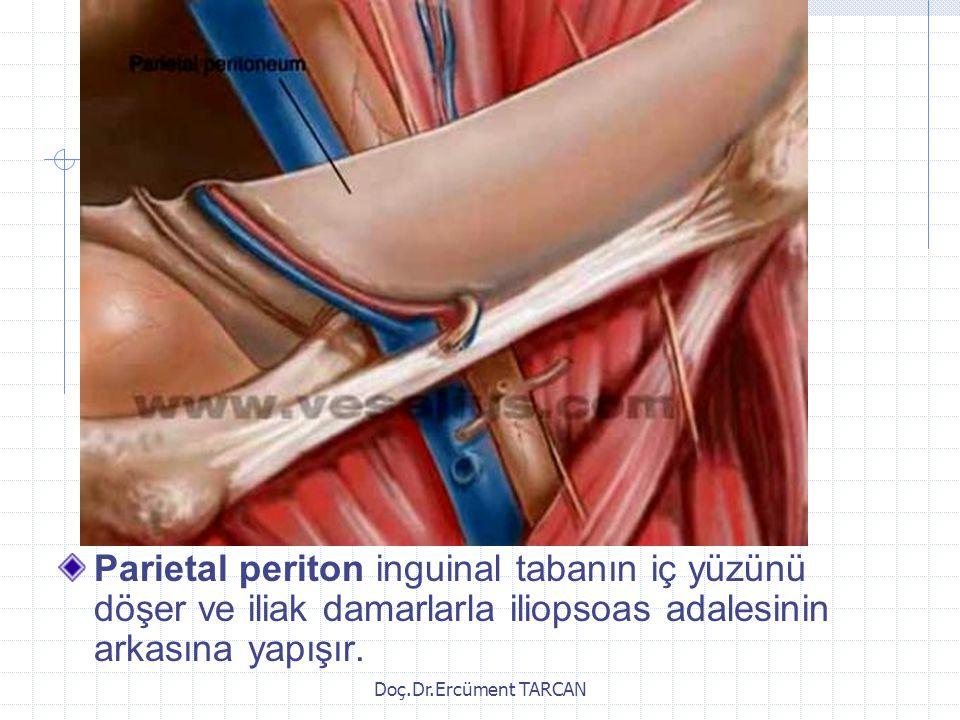 Parietal periton inguinal tabanın iç yüzünü döşer ve iliak damarlarla iliopsoas adalesinin arkasına yapışır.