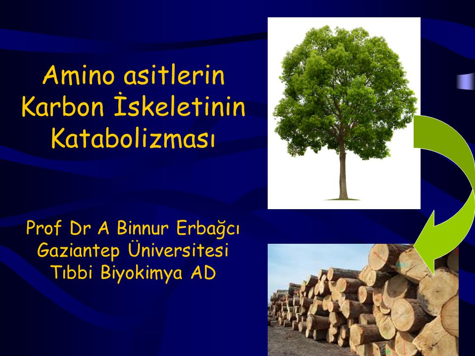 Amino asitlerin Karbon İskeletinin Katabolizması Prof Dr A Binnur Erbağcı Gaziantep Üniversitesi Tıbbi Biyokimya AD