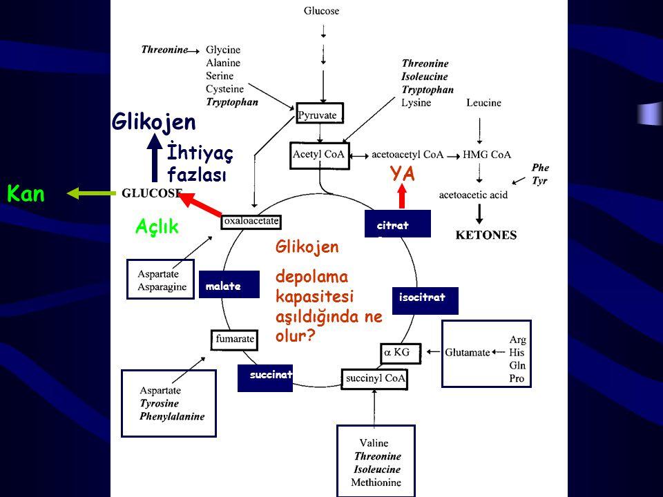 Glikojen Kan İhtiyaç fazlası YA Açlık Glikojen