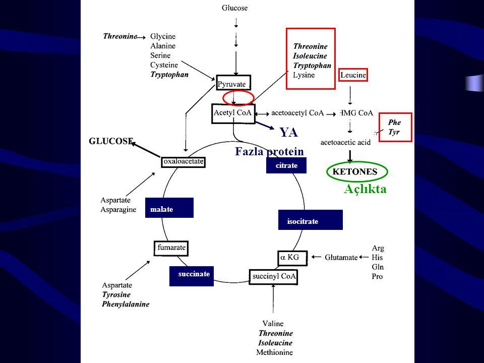 YA Fazla protein citrate Açlıkta malate isocitrate succinate