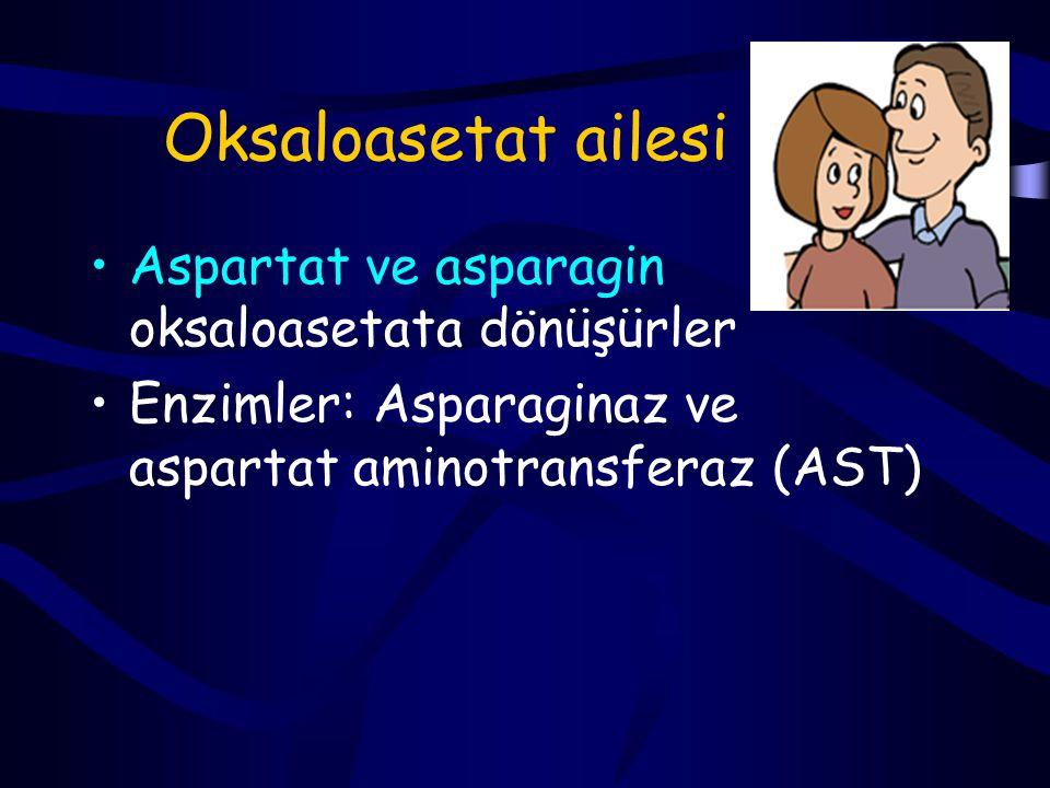 Oksaloasetat ailesi Aspartat ve asparagin oksaloasetata dönüşürler