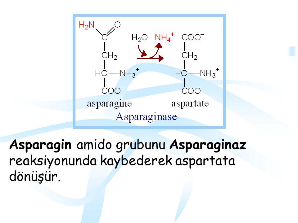 Asparagin amido grubunu Asparaginaz reaksiyonunda kaybederek aspartata dönüşür.
