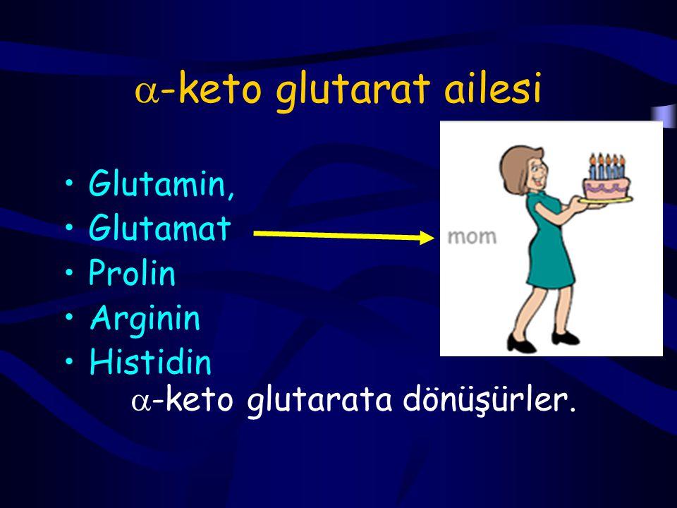 -keto glutarat ailesi