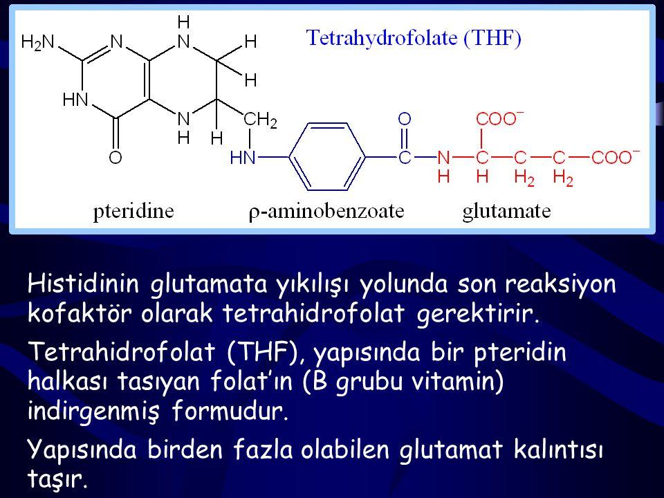 Histidinin glutamata yıkılışı yolunda son reaksiyon kofaktör olarak tetrahidrofolat gerektirir.