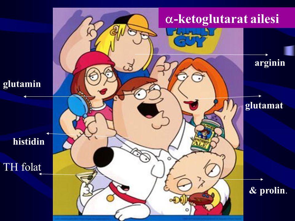 a-ketoglutarat ailesi