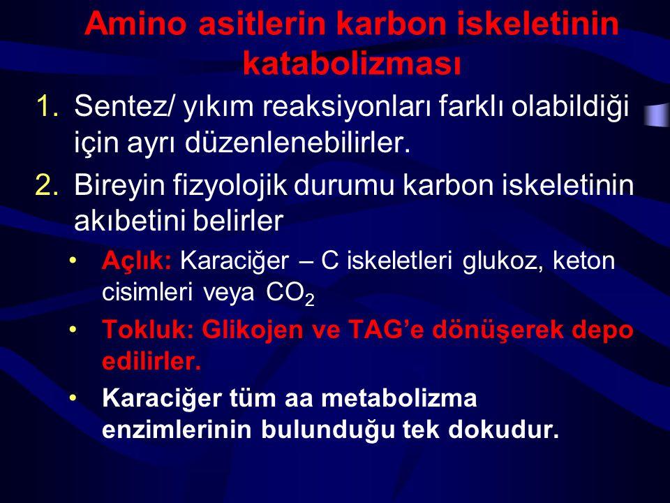 Amino asitlerin karbon iskeletinin katabolizması