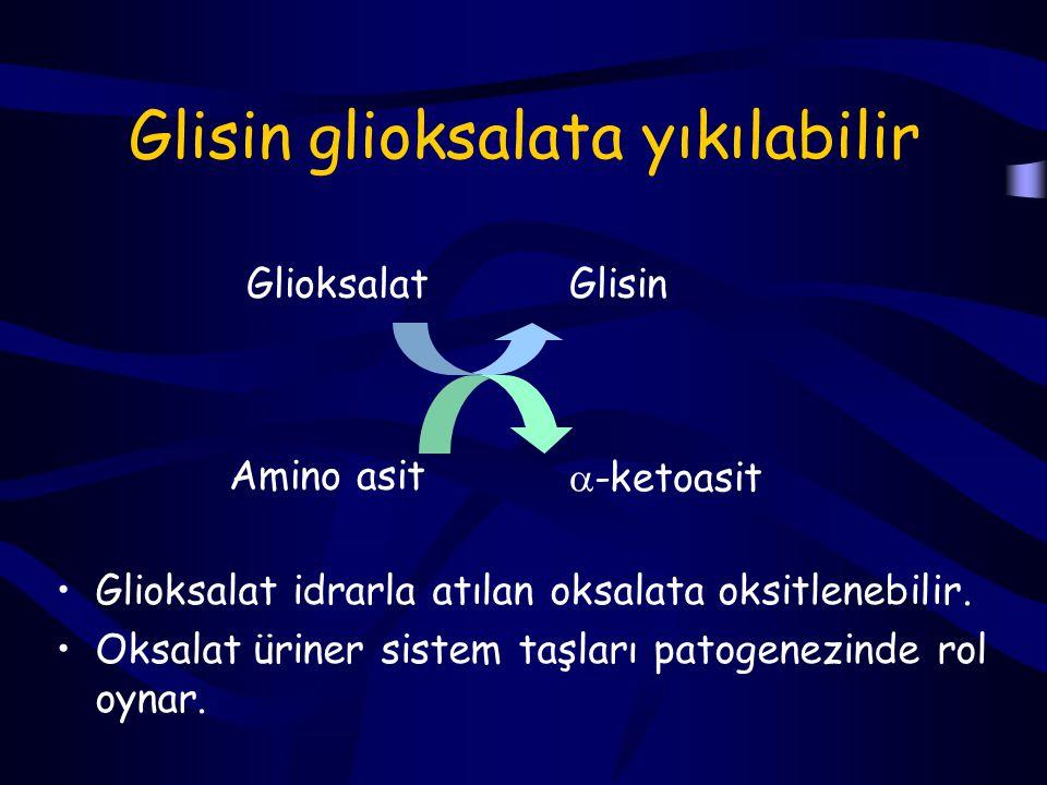 Glisin glioksalata yıkılabilir
