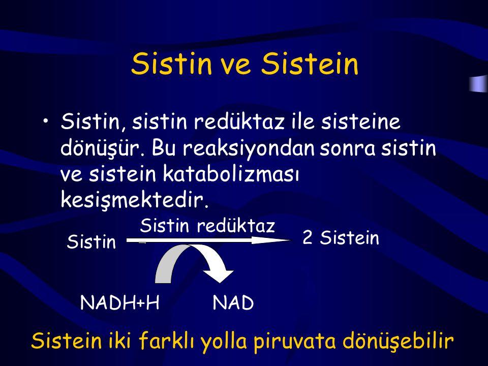 Sistin ve Sistein Sistin, sistin redüktaz ile sisteine dönüşür. Bu reaksiyondan sonra sistin ve sistein katabolizması kesişmektedir.