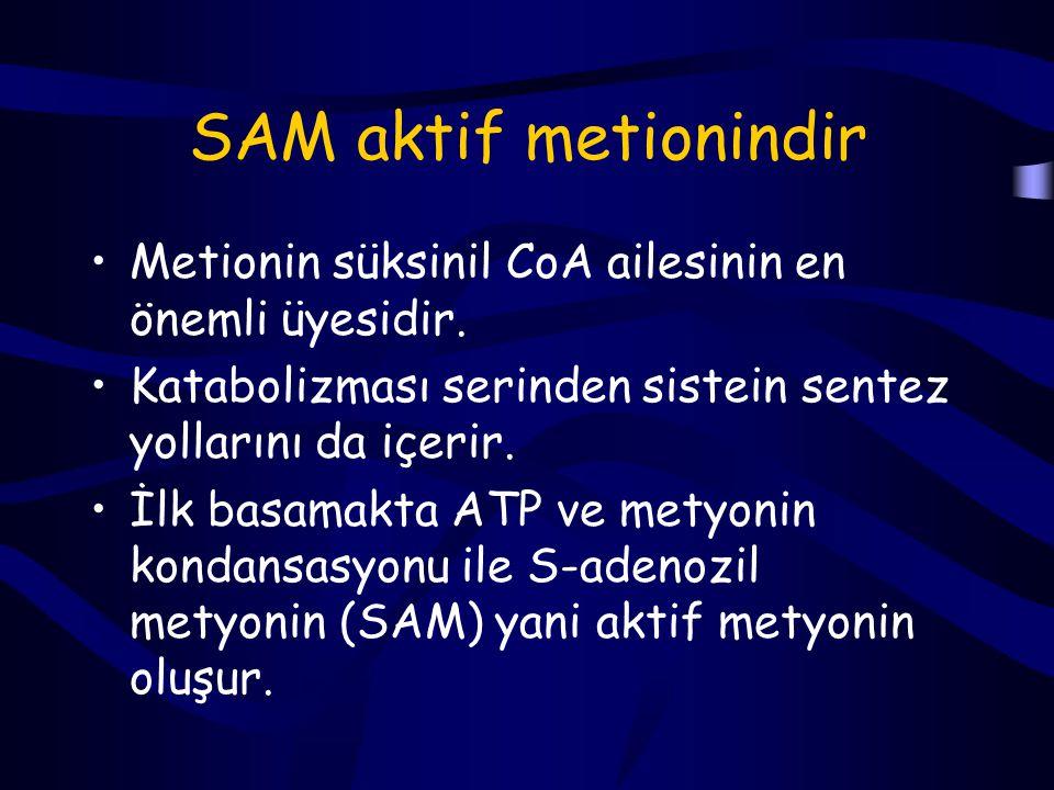 SAM aktif metionindir Metionin süksinil CoA ailesinin en önemli üyesidir. Katabolizması serinden sistein sentez yollarını da içerir.
