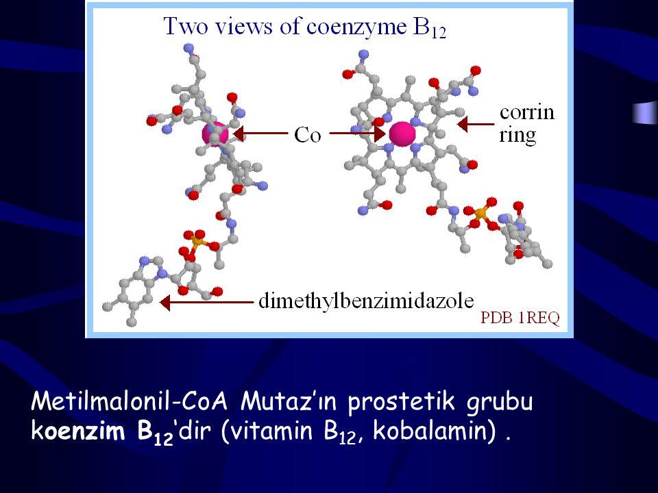 Metilmalonil-CoA Mutaz'ın prostetik grubu koenzim B12'dir (vitamin B12, kobalamin) .