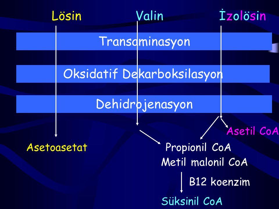 Oksidatif Dekarboksilasyon