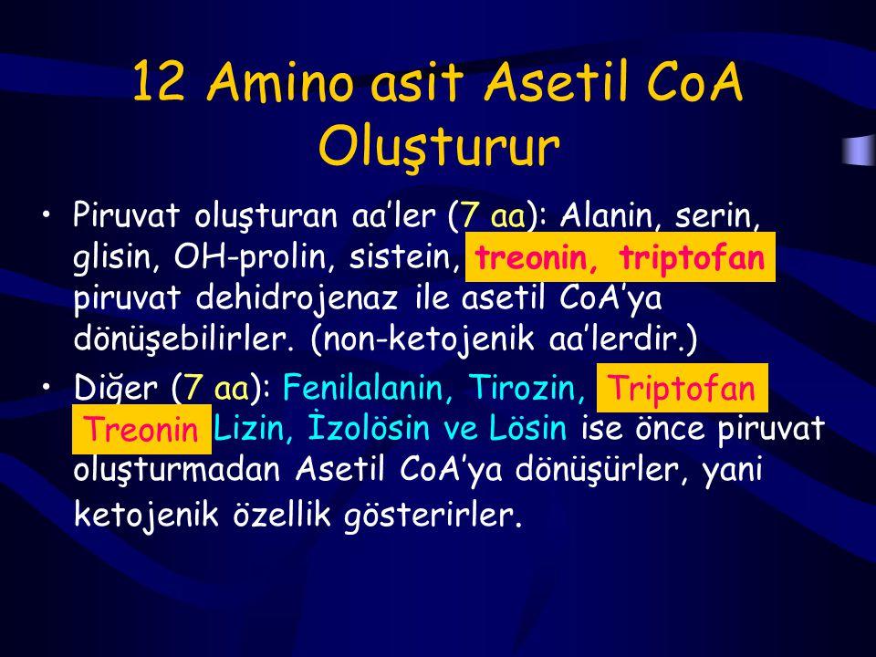 12 Amino asit Asetil CoA Oluşturur