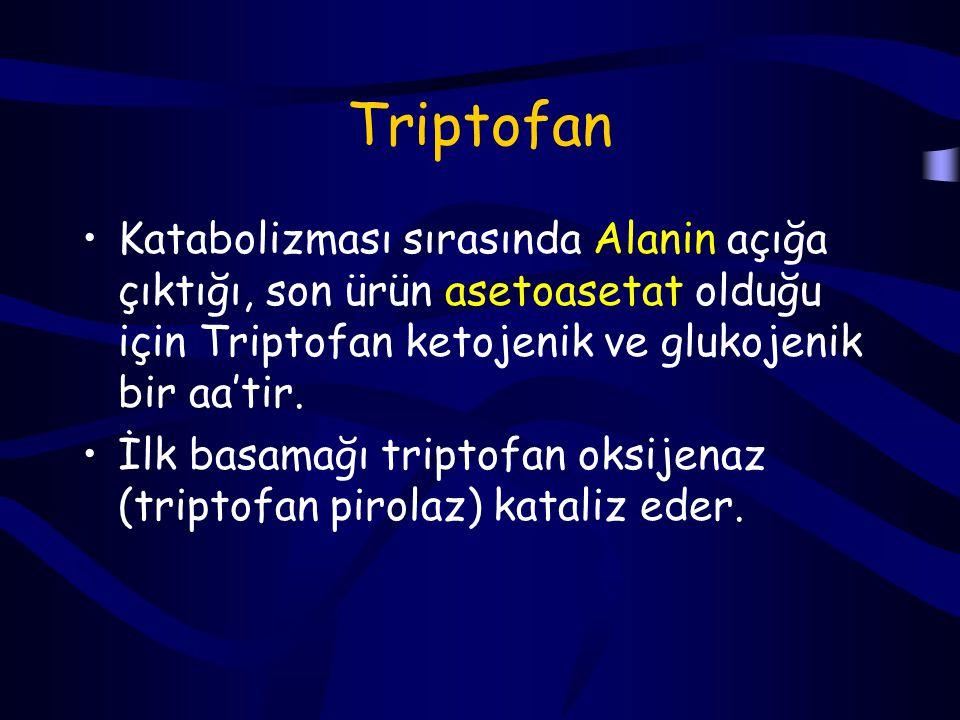 Triptofan Katabolizması sırasında Alanin açığa çıktığı, son ürün asetoasetat olduğu için Triptofan ketojenik ve glukojenik bir aa'tir.