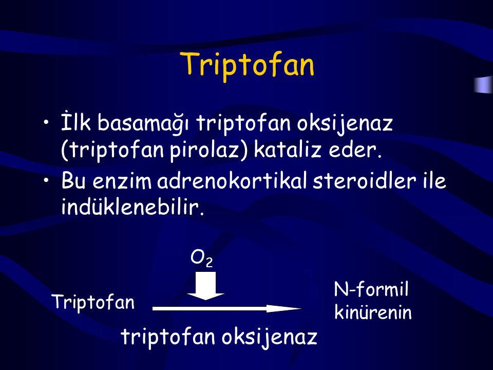 Triptofan İlk basamağı triptofan oksijenaz (triptofan pirolaz) kataliz eder. Bu enzim adrenokortikal steroidler ile indüklenebilir.