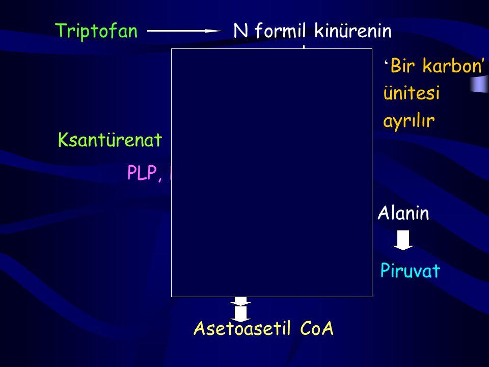 Triptofan N formil kinürenin. 'Bir karbon' ünitesi. ayrılır. Kinürenin. Ksantürenat. OH-kinürenin.