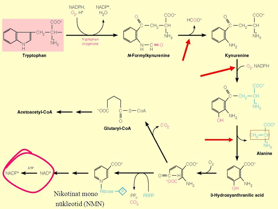 Nikotinat mono nükleotid (NMN)