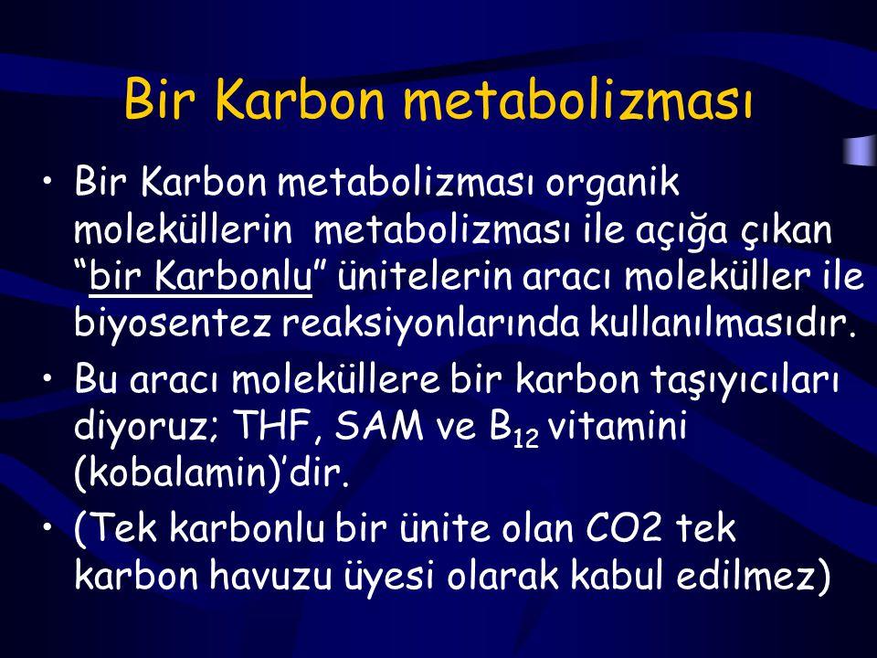 Bir Karbon metabolizması