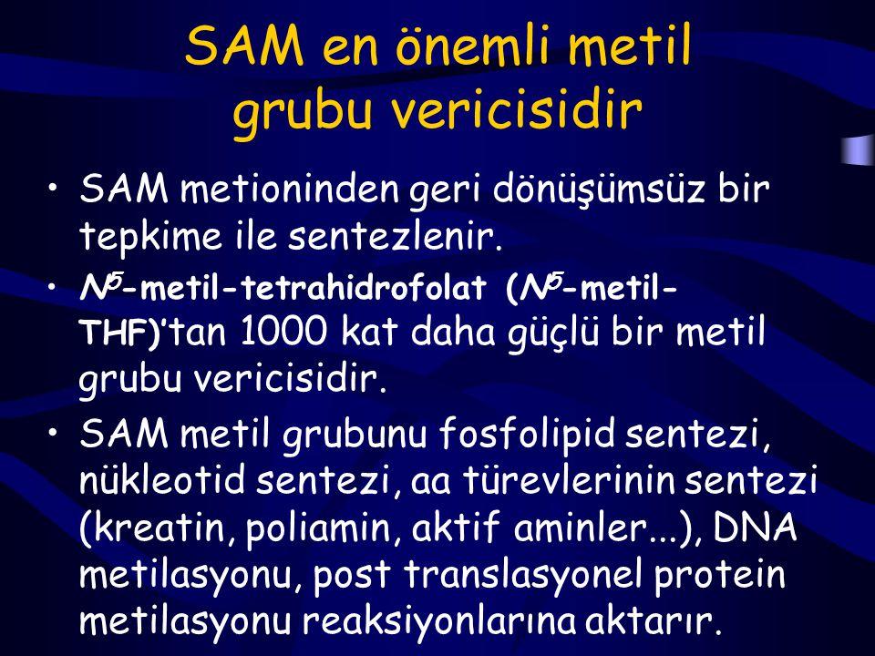 SAM en önemli metil grubu vericisidir
