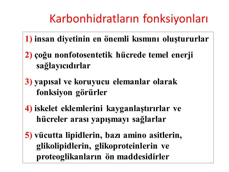 Karbonhidratların fonksiyonları