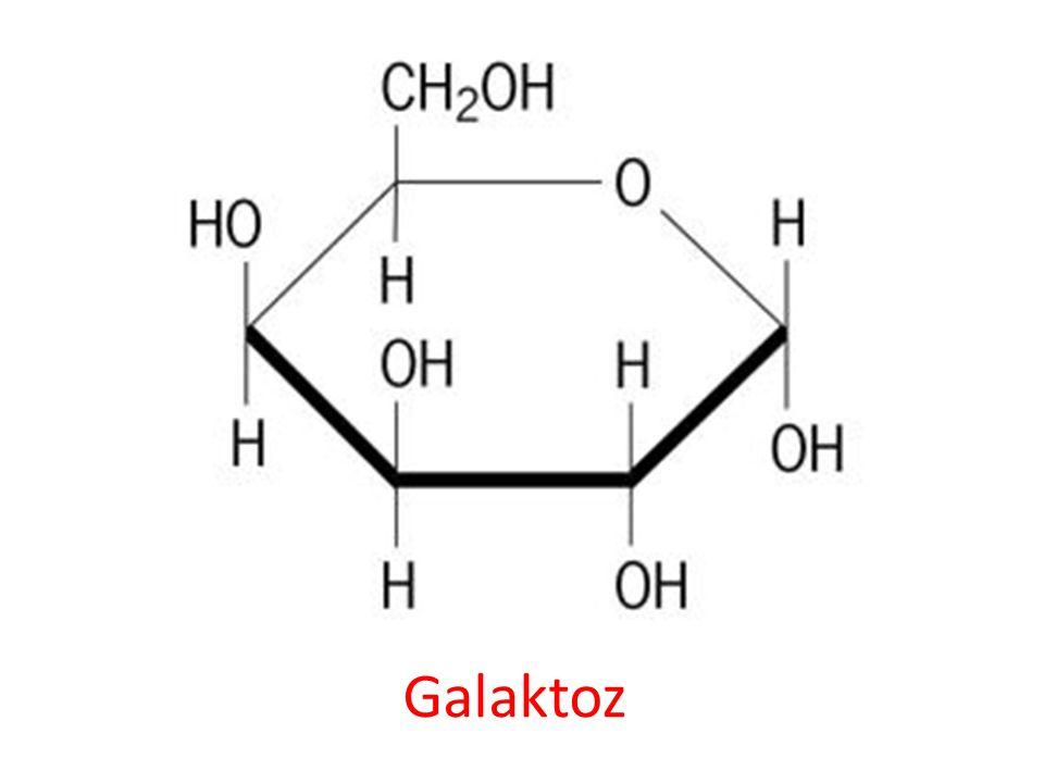 Galaktoz